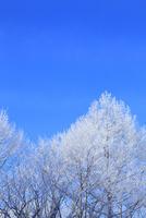 霧氷と青空 11076015390| 写真素材・ストックフォト・画像・イラスト素材|アマナイメージズ