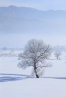 雪原と霧氷 11076015394| 写真素材・ストックフォト・画像・イラスト素材|アマナイメージズ