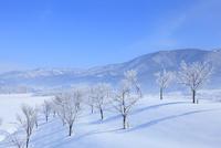 雪原と霧氷 11076015396| 写真素材・ストックフォト・画像・イラスト素材|アマナイメージズ