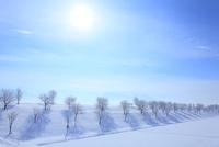 雪原と霧氷に太陽 11076015398| 写真素材・ストックフォト・画像・イラスト素材|アマナイメージズ