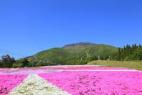 黒姫高原 芝桜と北信五岳・黒姫山