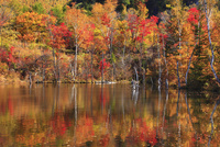 乗鞍高原・偲ぶの池の紅葉 11076015623| 写真素材・ストックフォト・画像・イラスト素材|アマナイメージズ