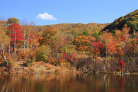 乗鞍高原・偲ぶの池の紅葉 11076015625| 写真素材・ストックフォト・画像・イラスト素材|アマナイメージズ