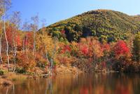 乗鞍高原・偲ぶの池の紅葉 11076015626| 写真素材・ストックフォト・画像・イラスト素材|アマナイメージズ