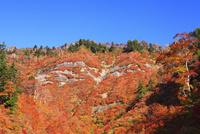 白山スーパー林道の紅葉 11076015628| 写真素材・ストックフォト・画像・イラスト素材|アマナイメージズ
