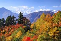 白山スーパー林道から望む白山と紅葉