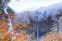 雪化粧した紅葉と白水滝