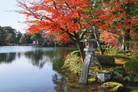 紅葉の兼六園 徽軫灯籠 11076015673| 写真素材・ストックフォト・画像・イラスト素材|アマナイメージズ