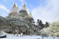 雪化粧の兼六園 11076015739| 写真素材・ストックフォト・画像・イラスト素材|アマナイメージズ