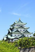 名古屋城・天守閣と新緑 11076015787| 写真素材・ストックフォト・画像・イラスト素材|アマナイメージズ