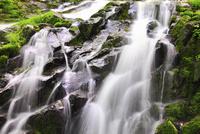 緑の苔と滝