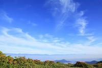 美ヶ原高原のツツジと北アルプス