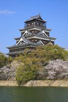 広島城とサクラ