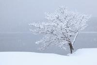 樹氷と青木湖