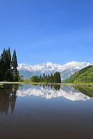 新緑と水田に北アルプス・五竜岳