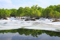 新緑と残雪の鎌池