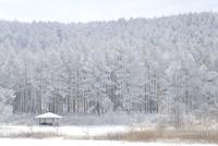 聖高原 中牧湖の霧氷 11076016305| 写真素材・ストックフォト・画像・イラスト素材|アマナイメージズ