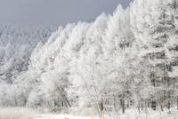 霧氷 11076016306| 写真素材・ストックフォト・画像・イラスト素材|アマナイメージズ