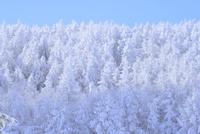霧氷 11076016327| 写真素材・ストックフォト・画像・イラスト素材|アマナイメージズ