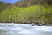 新緑と松川の清流