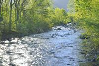 新緑と松川