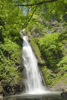不動滝と新緑