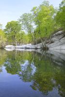 鉈池と新緑
