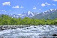 新緑の松川と北アルプス・五竜岳