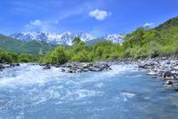 新緑の松川と白馬三山