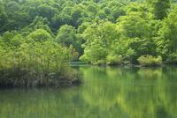 鎌池と新緑