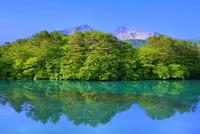 新緑の裏磐梯 五色沼(毘沙門沼)と磐梯山
