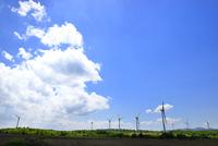布引高原 風車群と雲