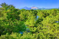 裏磐梯 新緑の中瀬沼と磐梯山