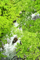 裏磐梯 新緑の中津川渓谷