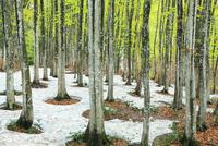 美人林の新緑と残雪