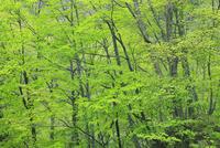 松川渓谷の新緑