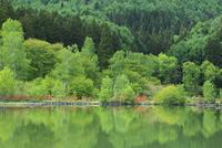聖高原・大池の新緑