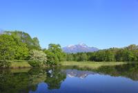 新緑の大久保の池と北信五岳・妙高山