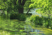 万水川の新緑