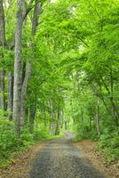 新緑の雑木林と道