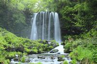 唐沢の滝と新緑