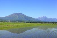 水田と北信五岳(黒姫山・妙高山)