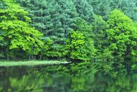 御射鹿池の新緑 11076016818| 写真素材・ストックフォト・画像・イラスト素材|アマナイメージズ