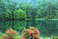 御射鹿池の新緑とツツジ 11076016820| 写真素材・ストックフォト・画像・イラスト素材|アマナイメージズ