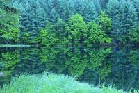 御射鹿池の新緑
