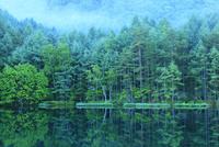 御射鹿池の新緑 11076016830| 写真素材・ストックフォト・画像・イラスト素材|アマナイメージズ