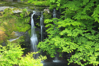 新緑の水無川