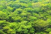 新緑の山肌