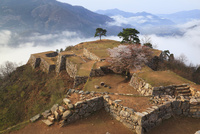 ヤマザクラ咲く竹田城跡と雲海