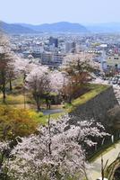 津山城・鶴山公園のサクラと津山市街